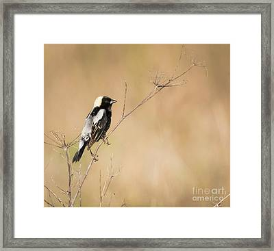 Framed Print featuring the photograph Bobolink  by Ricky L Jones