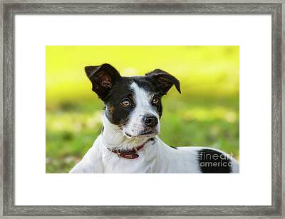 Bodeguero Andalus 09 Framed Print by Angela Doelling AD DESIGN Photo and PhotoArt