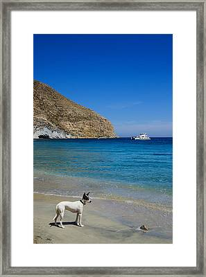 Bodeguero On The Beach Framed Print by Digby  Merry