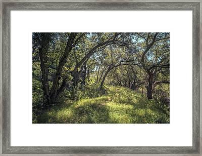 Boden Canyon - Green Canopy Framed Print by Alexander Kunz