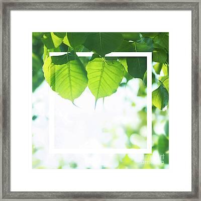 Bodhi Leaves With White Frame Framed Print