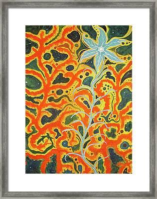 Bodhi Shunyata Framed Print by Scott Harrington