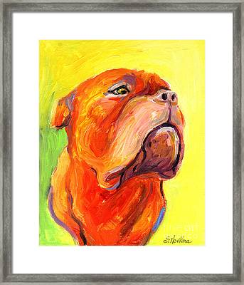 Bodreaux Mastiff Dog Painting Framed Print by Svetlana Novikova