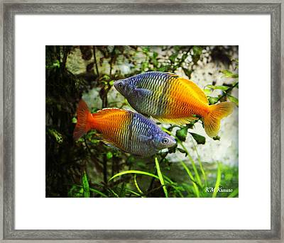 Boeseman's Rainbowfish Framed Print