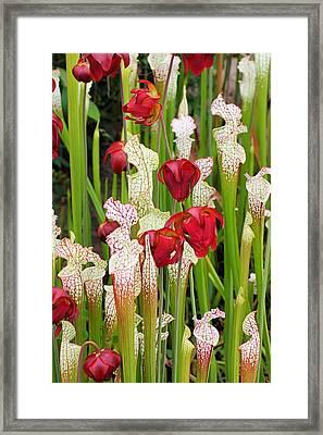 Bog In Bloom Framed Print