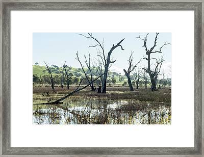 Boggy Bridge Swamp Framed Print