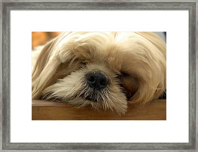 Bogie Asleep Framed Print