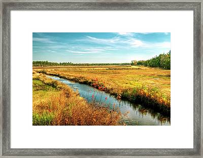 Bogs In The Pine Lands New Jersey Framed Print by Geraldine Scull