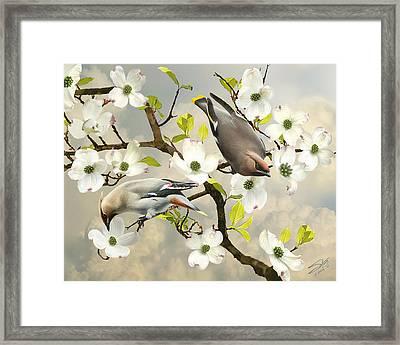 Bohemian Waxwings In Dogwood Tree Framed Print by IM Spadecaller