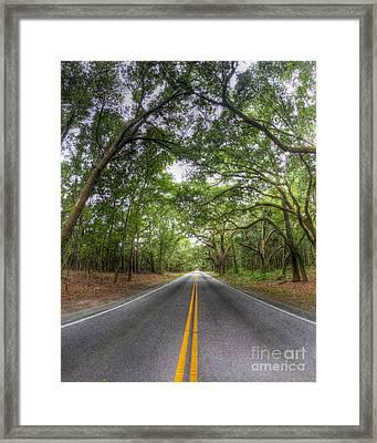 Bohicket Road Johns Island South Carolina Framed Print by Dustin K Ryan