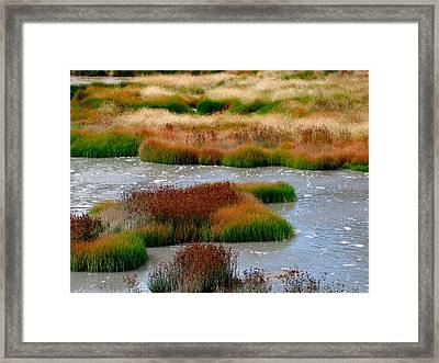 Boiling Mud And Grass Framed Print