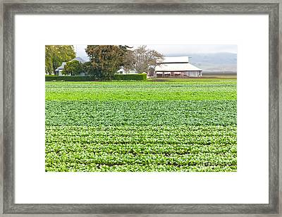 Bok Choy Field And Farm Framed Print by Inga Spence
