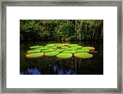 Bok Tower Gardens Victoria Longwood Lily Pads  -  Boklily984 Framed Print