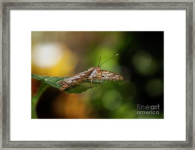 Bokeh And Butterfly  Framed Print