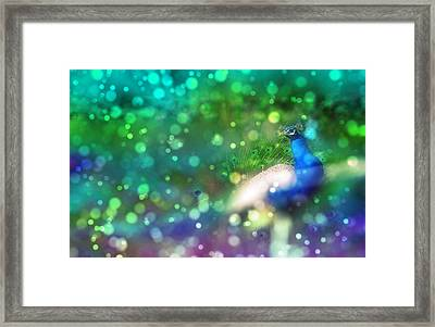 Bokeh Peacock Framed Print by Audrey Jeanne Roberts