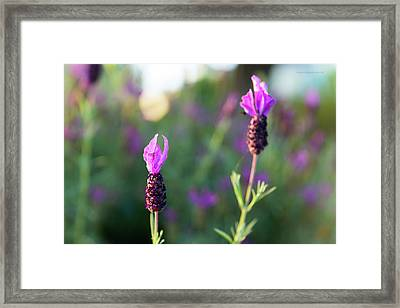 Framed Print featuring the photograph Bokehlicious Bloom by Lora Lee Chapman
