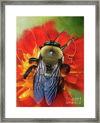 Bold And Beeautiful Framed Print by Anita Faye