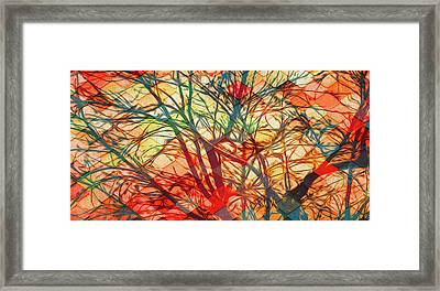 Bold And Colorful Framed Print