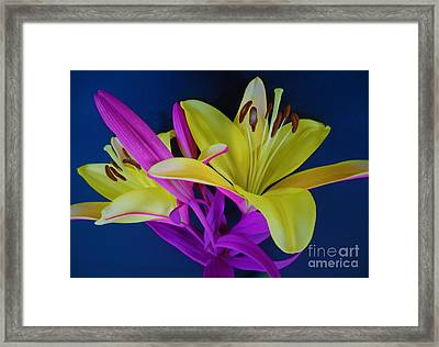 Framed Print featuring the photograph Bold Beautiful Flowers by Ray Shrewsberry