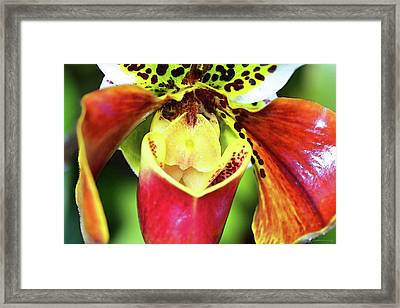 Bold Flower Art - Intimate Orchid 6 - Sharon Cummings Framed Print by Sharon Cummings