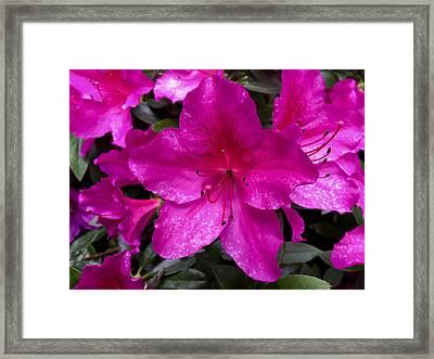 Bold Pink Flower Framed Print