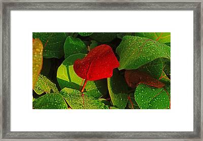 Bold Red Sea Grape Leaf Framed Print