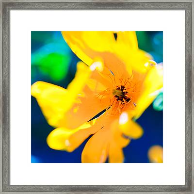 Bold Yellow Framed Print