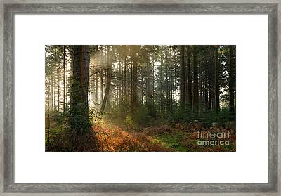 Bolderwood Morning I Framed Print by Richard Thomas