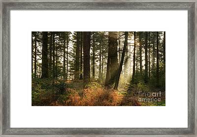 Bolderwood Morning II Framed Print by Richard Thomas