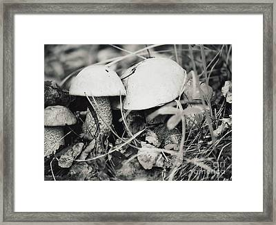 Framed Print featuring the photograph Boletus Mushrooms by Juls Adams
