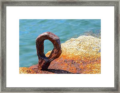 Framed Print featuring the photograph Bolted by Corinne Rhode