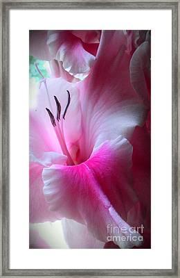 Bon Bon Framed Print