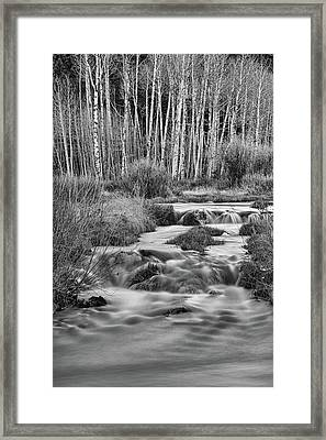 Bonanza Streaming Framed Print by James BO Insogna