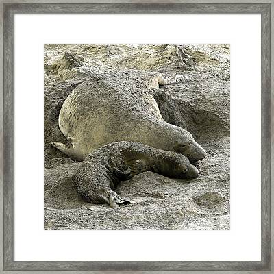 Bonding Framed Print
