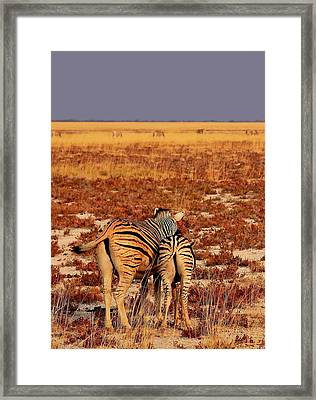Bonding Framed Print by Stacie Gary
