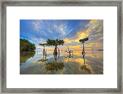 Bonefish Sunrise Framed Print by Angie Chestnut