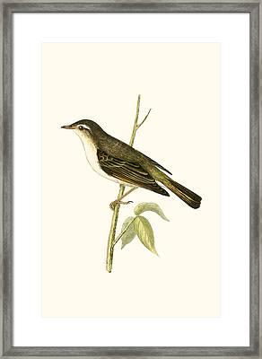 Bonelli's Warbler Framed Print