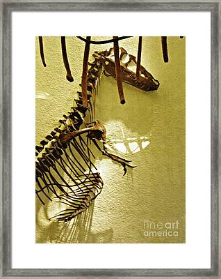 Bones Tell Stories Framed Print