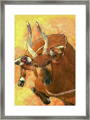 Bongo 2 Framed Print by Jack Zulli