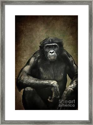 Bonobo Framed Print by Angela Doelling AD DESIGN Photo and PhotoArt
