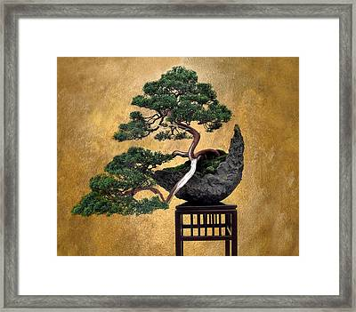 Bonsai 3 Framed Print