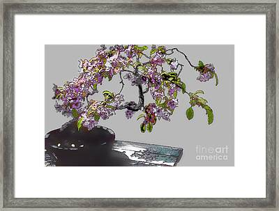 Bonsai Beauty Framed Print by Linda  Parker