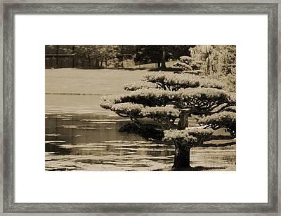 Bonsai Tree Near Pond In Sepia Framed Print