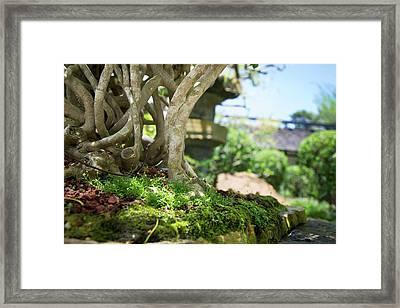 Bonsai View Framed Print