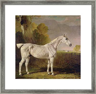 Bony Grey Nag Framed Print by Benjamin Marshall