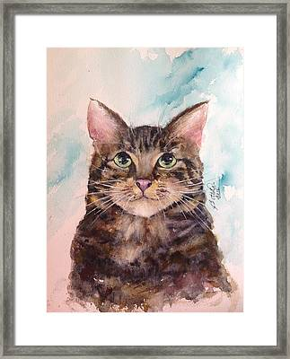 Boo Boo Framed Print by Bette Orr