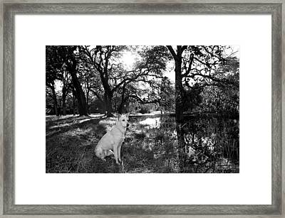 Boo Ranch Dog Framed Print by Jimmy Bruch