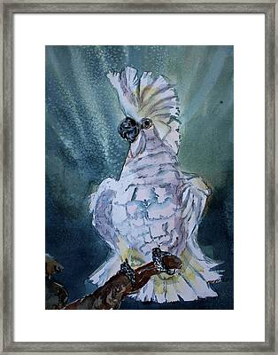 Boo The Umbrella Cockatoo Framed Print