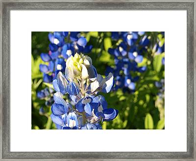 Book End I Framed Print by James Granberry