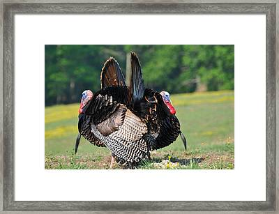 Book Ends Framed Print by Todd Hostetter